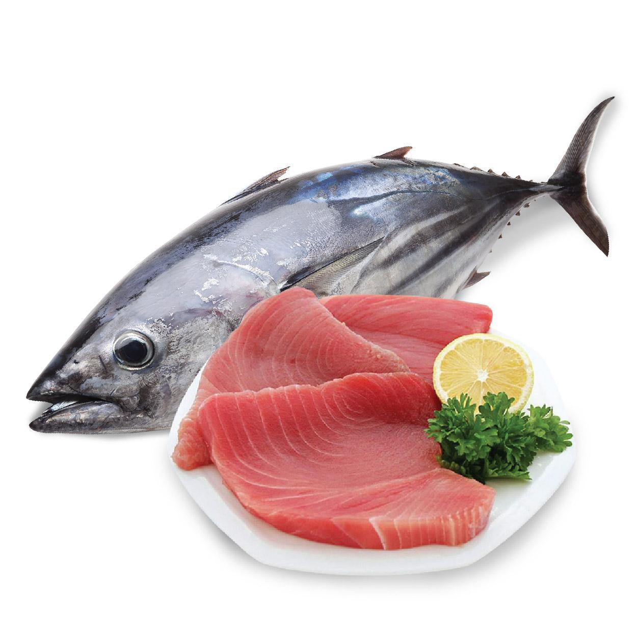 Cá ngừ đại dương có độc không