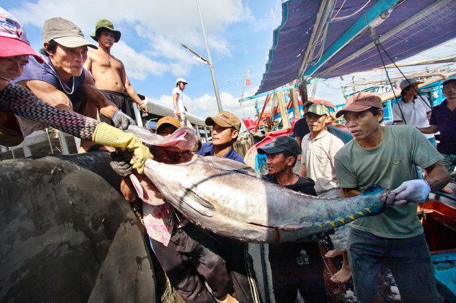 Giá của cá ngừ đại dương cũng phụ thuộc vào mùa đánh bắt
